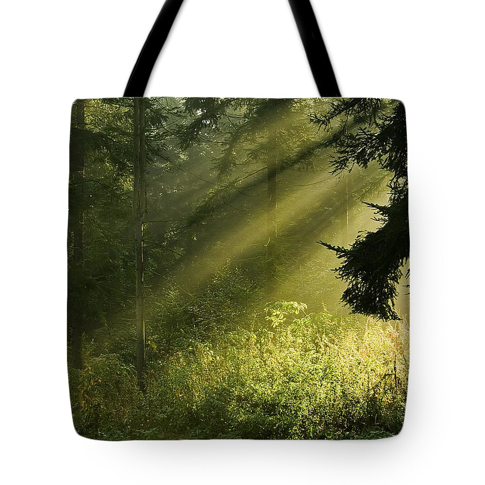 Nature Tote Bag featuring the photograph Sunlight by Daniel Csoka