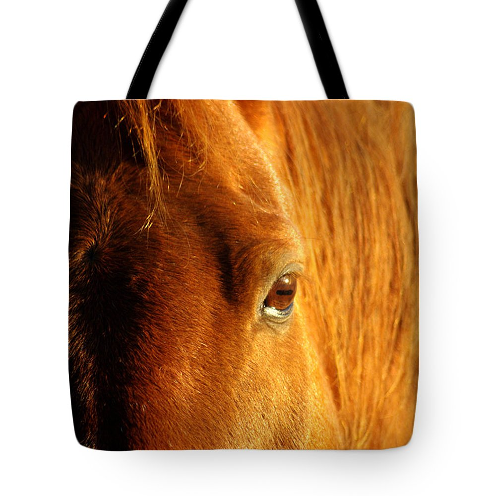 Jenny Gandert Tote Bag featuring the photograph Sunlight Eyes by Jenny Gandert