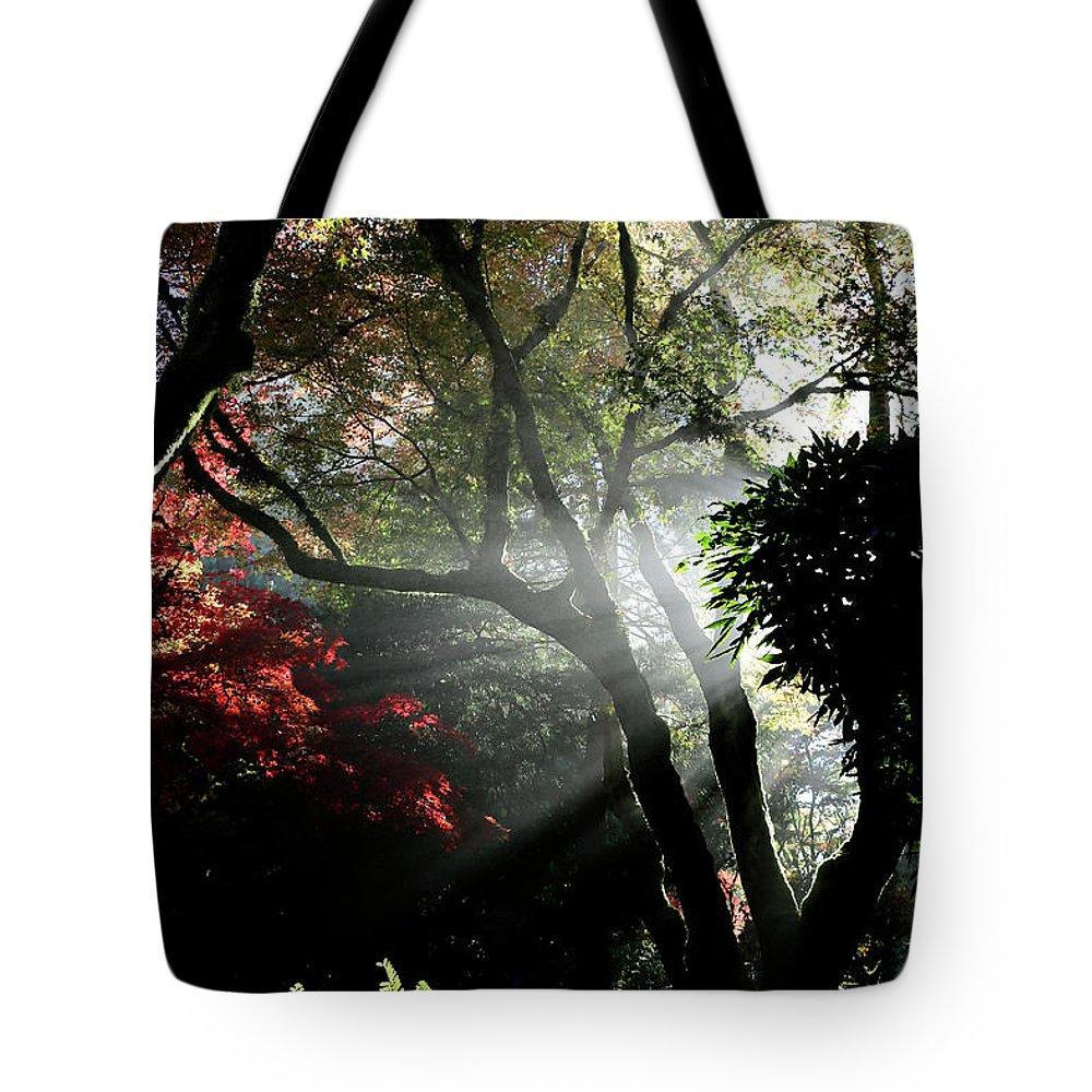 Outdoor Tote Bag featuring the photograph Sunlight Through The Tree In Misty Morning 1. by Andrew Kim