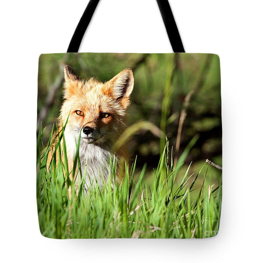 Red Fox Portrait Tote Bag featuring the photograph Sunlit Face by Jim Garrison