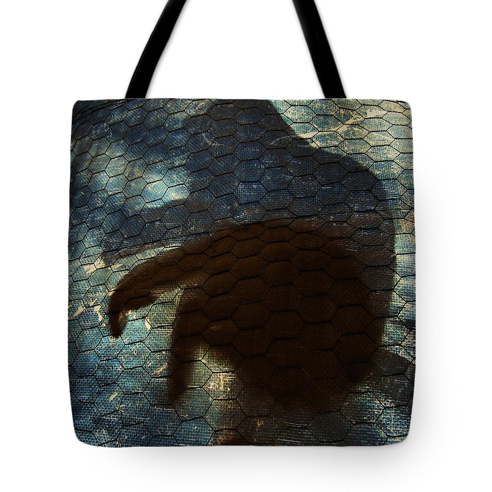 Cat Tote Bag featuring the photograph Sunning Shadow by David Sutter