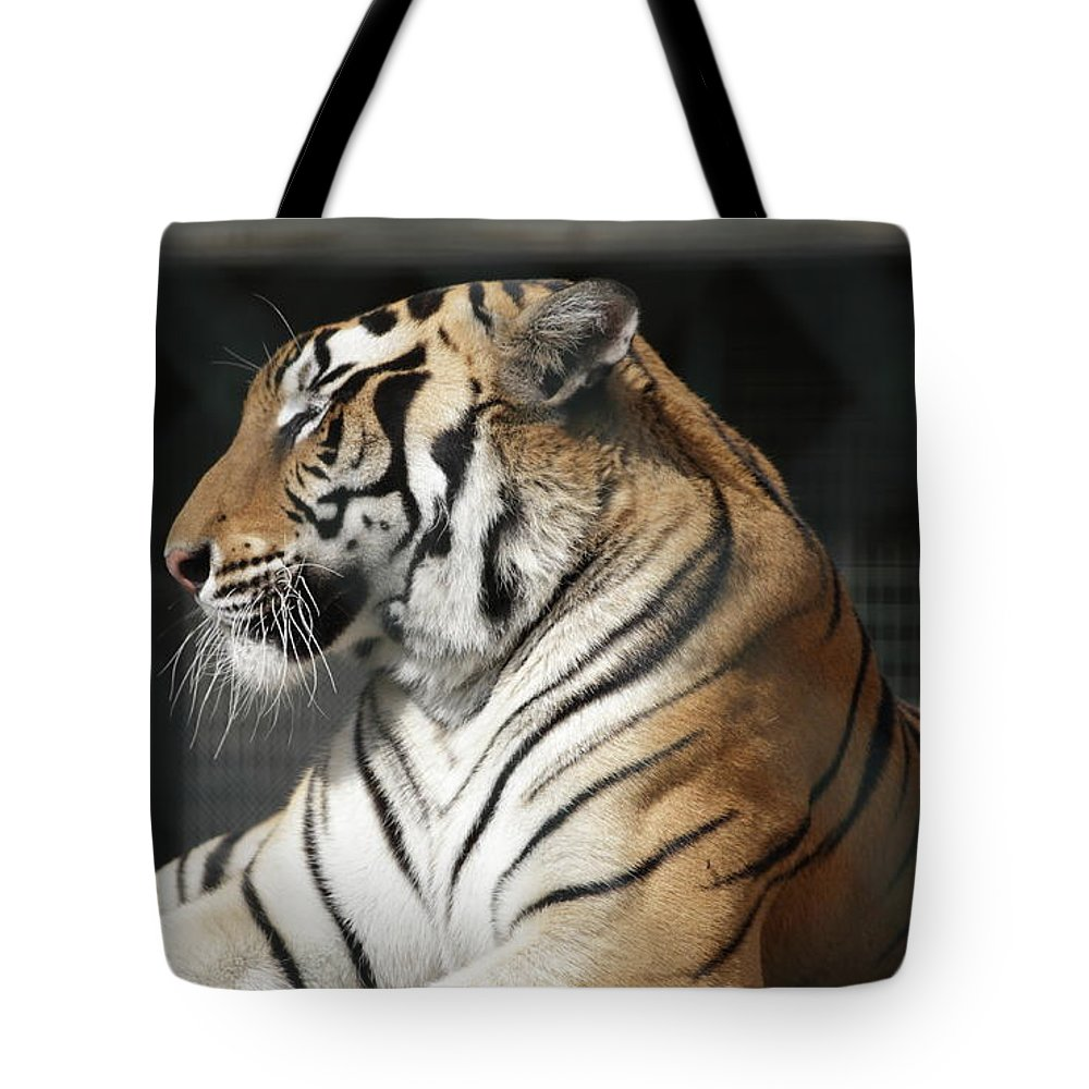 Tiger Tote Bag featuring the photograph Sunning Tiger by Jim Allsopp