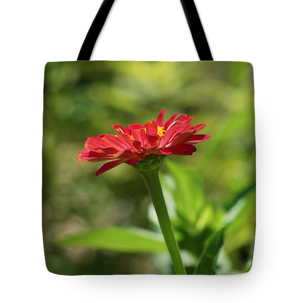 Zinnia Tote Bag featuring the photograph Sunning Zinnia by Carrie Goeringer