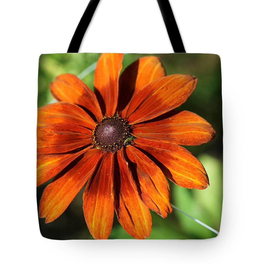 Orange Tote Bag featuring the photograph Sunny Orange Daisy by Carrie Goeringer