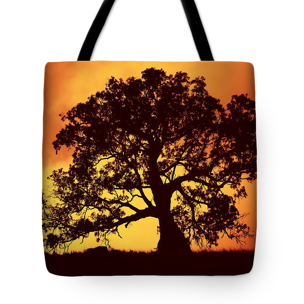 Gum Tree Tote Bag featuring the photograph Sunrise Gum by Mike Dawson
