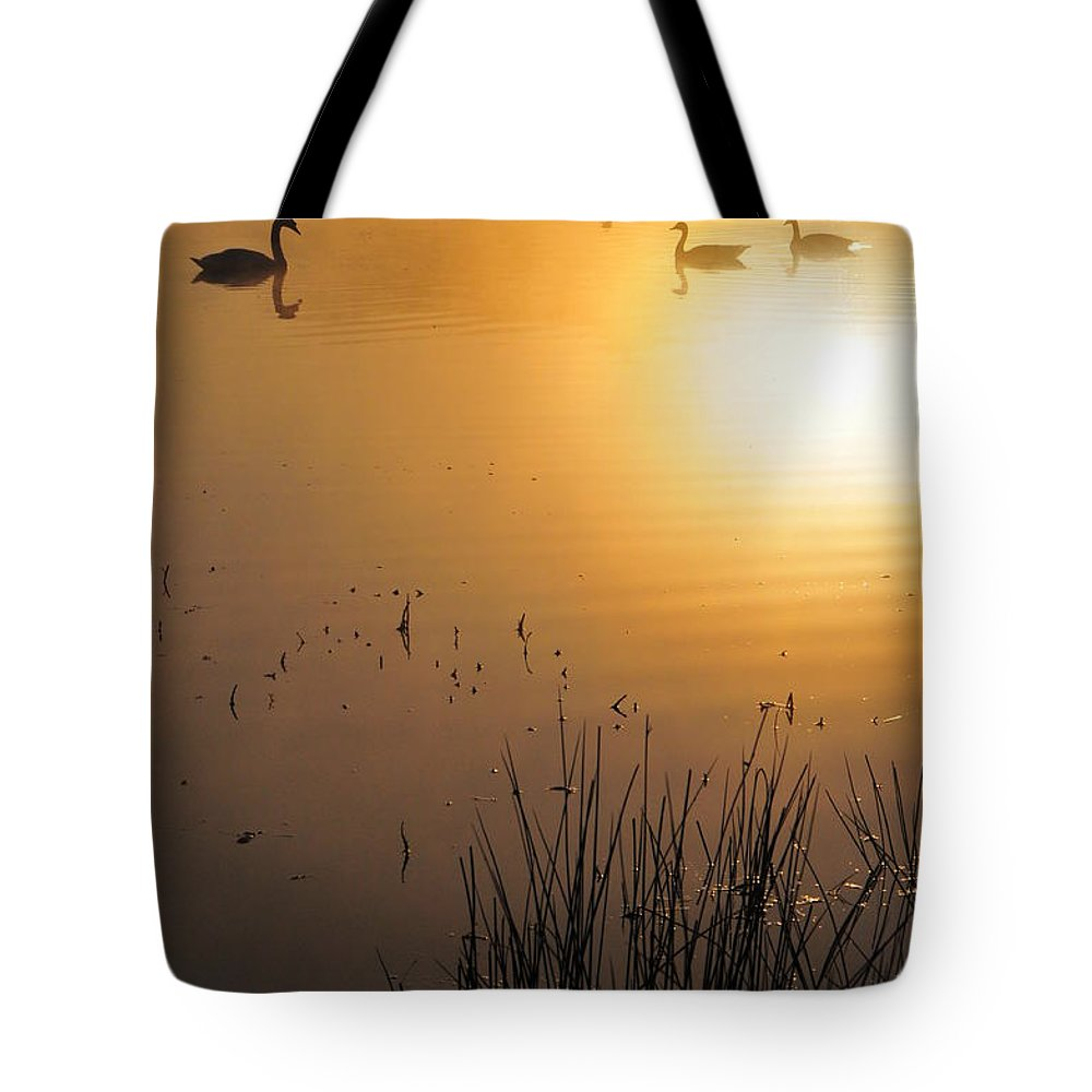Duck Tote Bag featuring the photograph Sunrise Swim by Catherine Reusch Daley