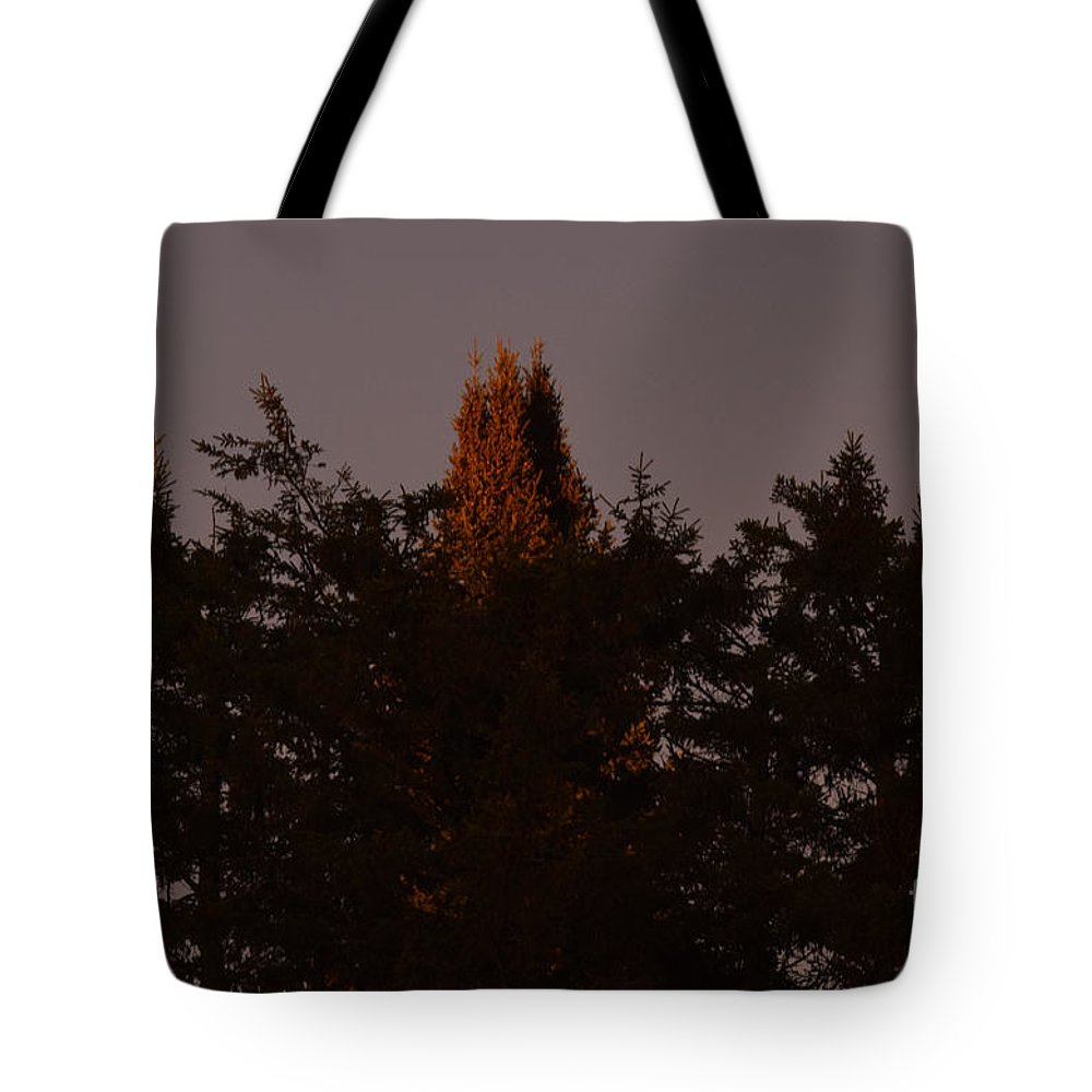 Conifers Tote Bag featuring the photograph Sunset Light by William Tasker