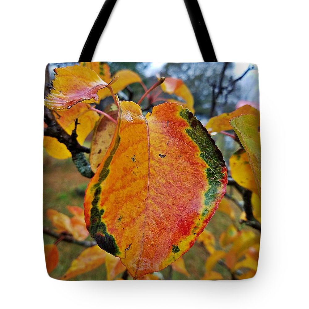 Sunshine In The Rain Tote Bag featuring the photograph Sunshine In The Rain by Maria Urso