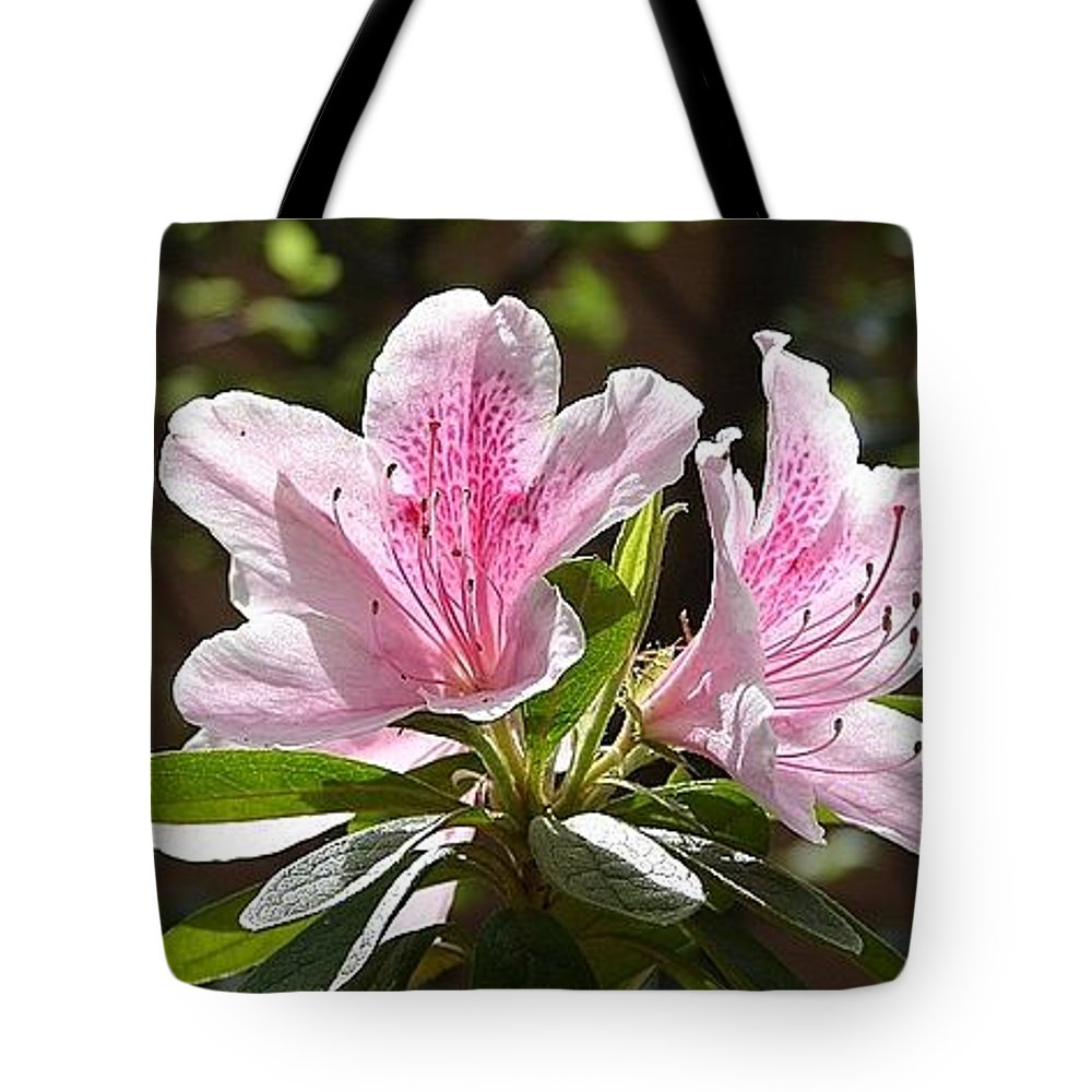 Lily Pinkgreen Pedals Leaves Tote Bag featuring the photograph Sunshine by Luciana Seymour