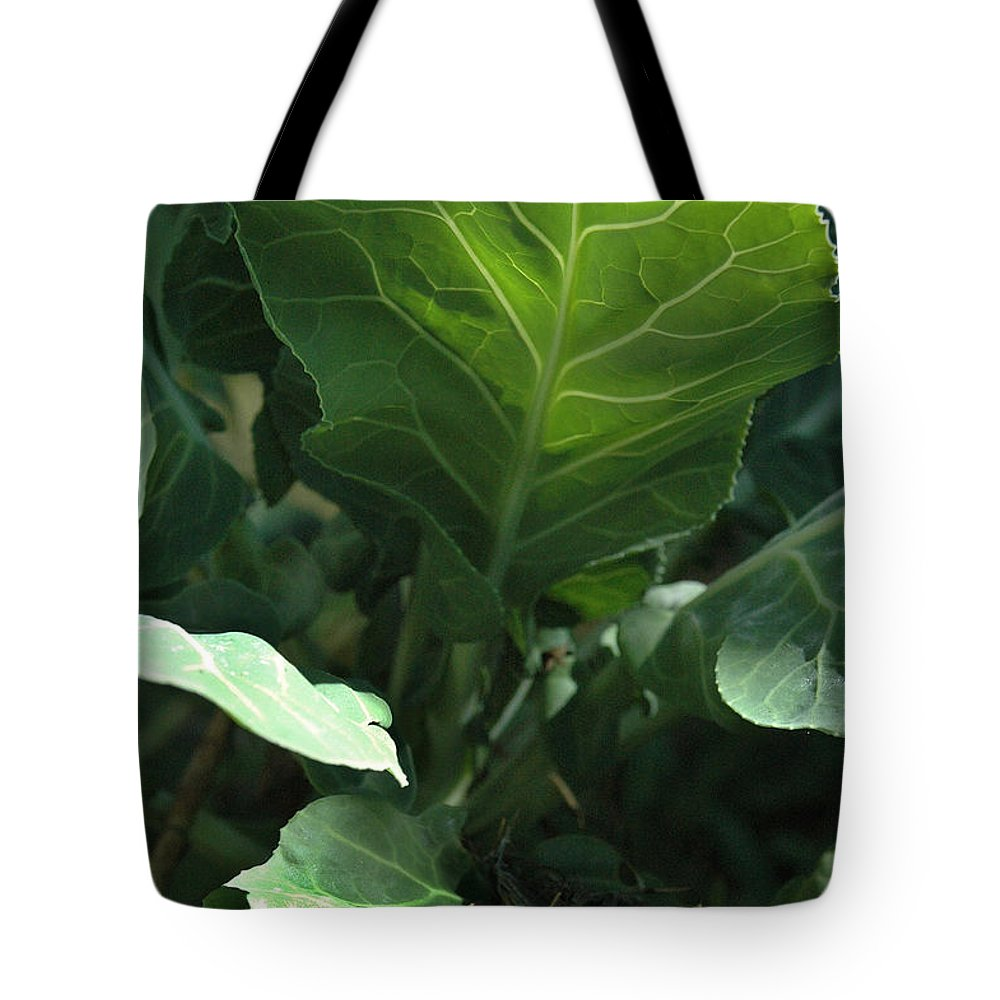 Cabbage Tote Bag featuring the photograph Super-fly Cabbage by Trish Hale
