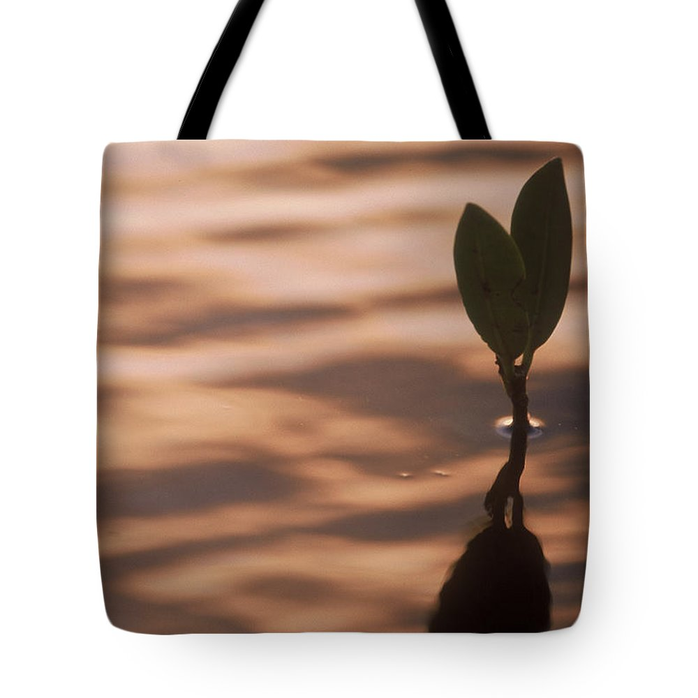 Nature Tote Bag featuring the photograph Surfacing Mangrove by Kimberly Mohlenhoff