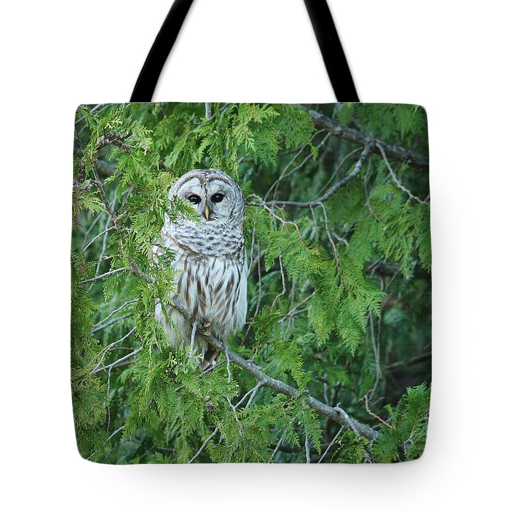 Barred Owl Tote Bag featuring the photograph Surprise Visitor by Teresa McGill
