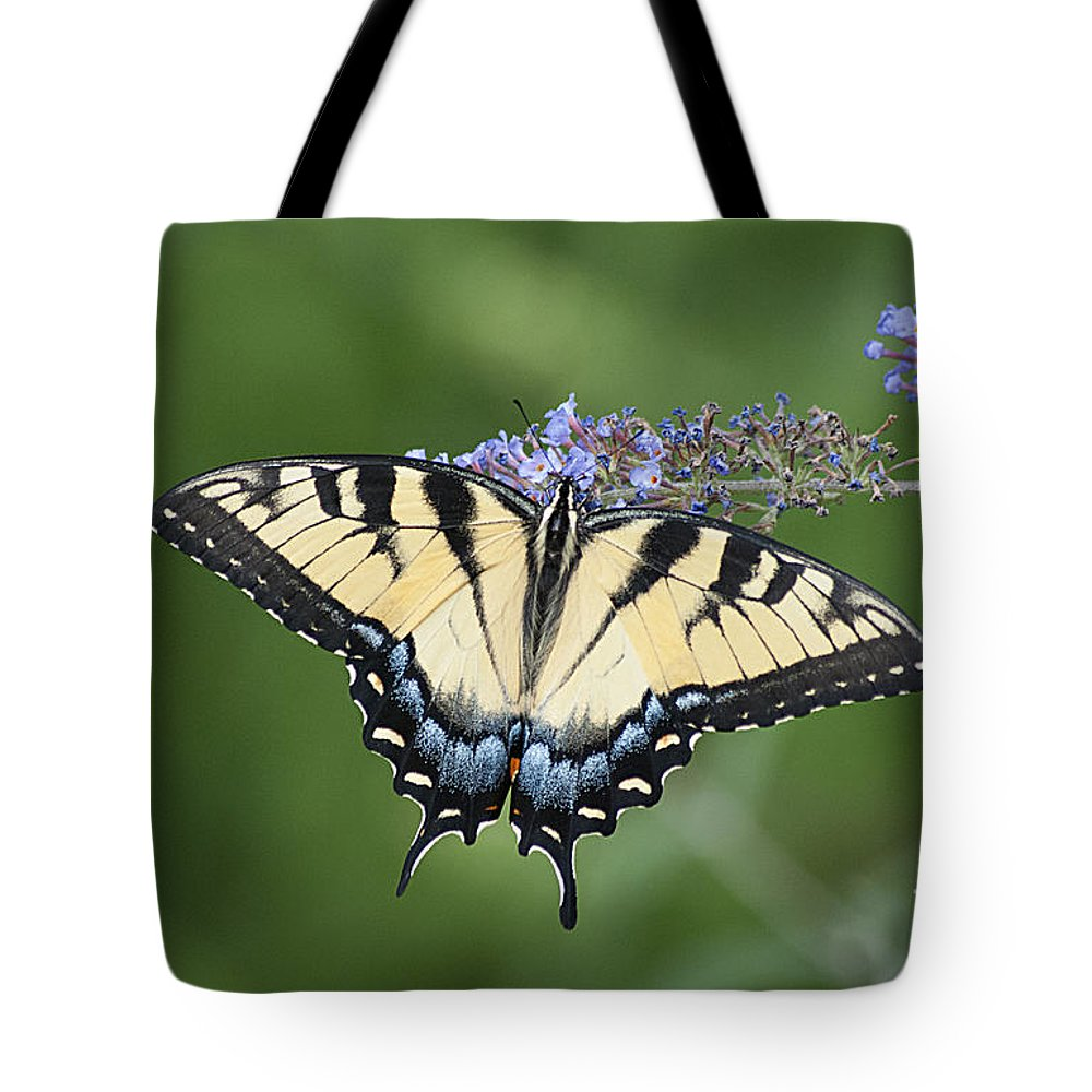 Swallowtail Tote Bag featuring the photograph Swallowtail 20120723_24a by Tina Hopkins