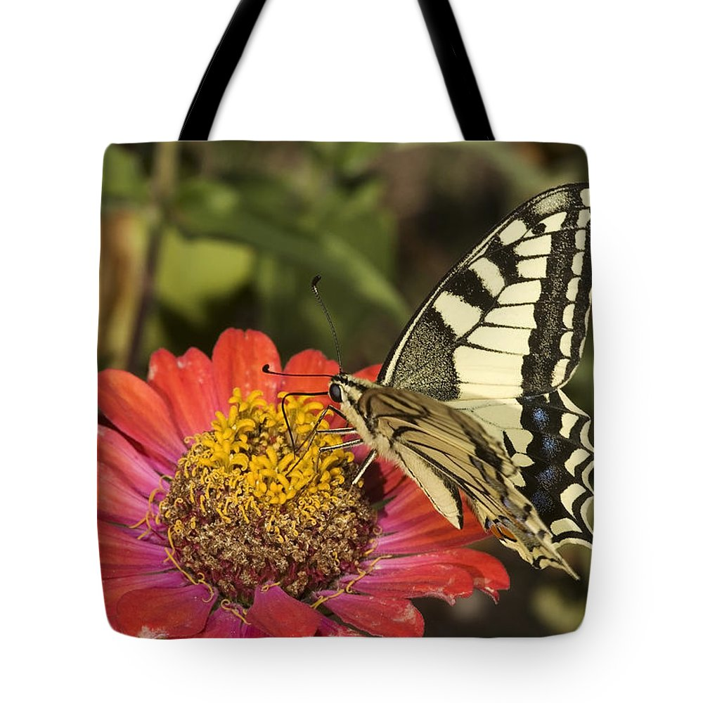 Swallowtail Tote Bag featuring the photograph Swallowtail by Cliff Norton