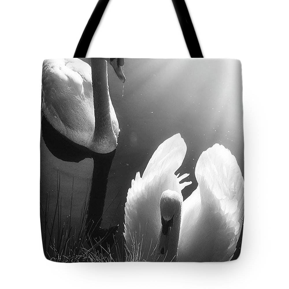 Swan Tote Bag featuring the photograph Swan Lake In Winter - Kingsbury Nature by John Edwards