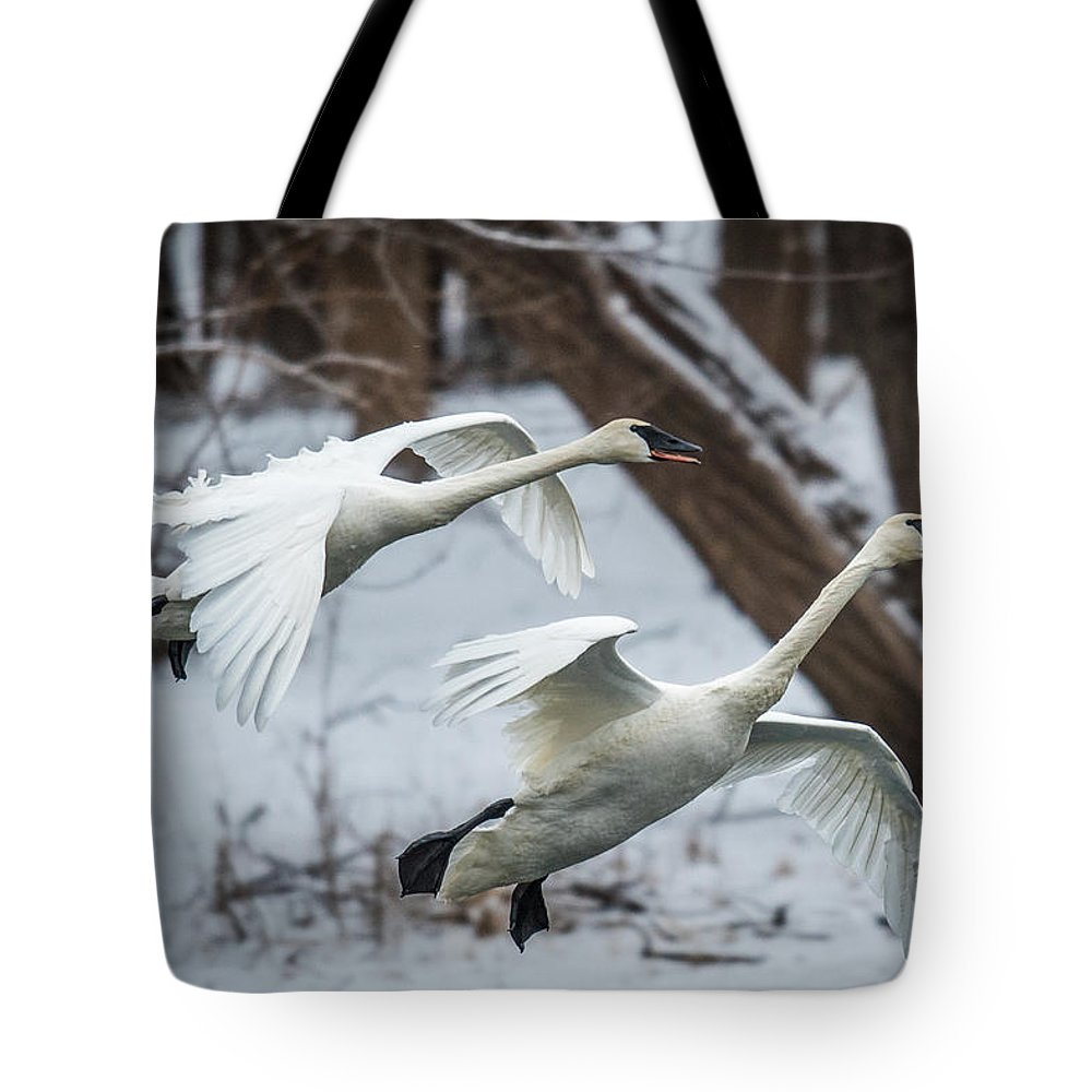 Swan Tote Bag featuring the photograph Swans Landing by Paul Freidlund