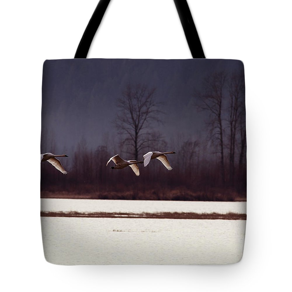 Trumpeter Swans Tote Bag featuring the photograph Swans Over The Marsh by Sharon Talson