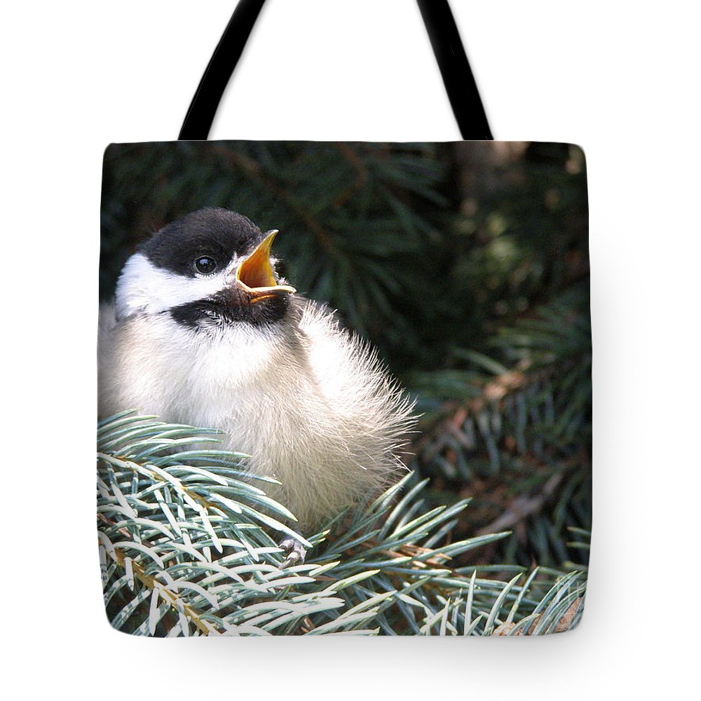 Black Capped Chickadee Tote Bag featuring the photograph Sweet Chickadee by Angie Rea