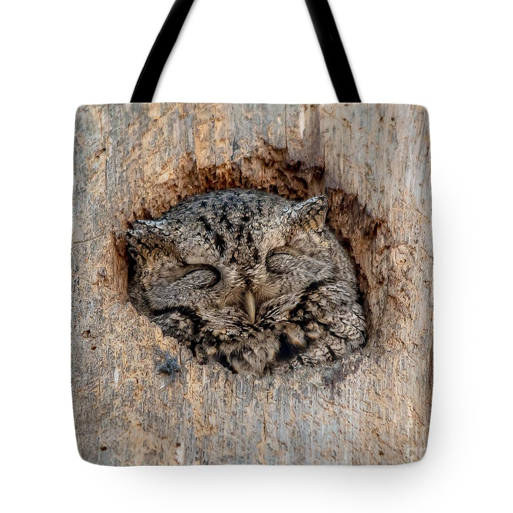 Cheryl Baxter Photography Tote Bag featuring the photograph Sweet Dreams Screech by Cheryl Baxter