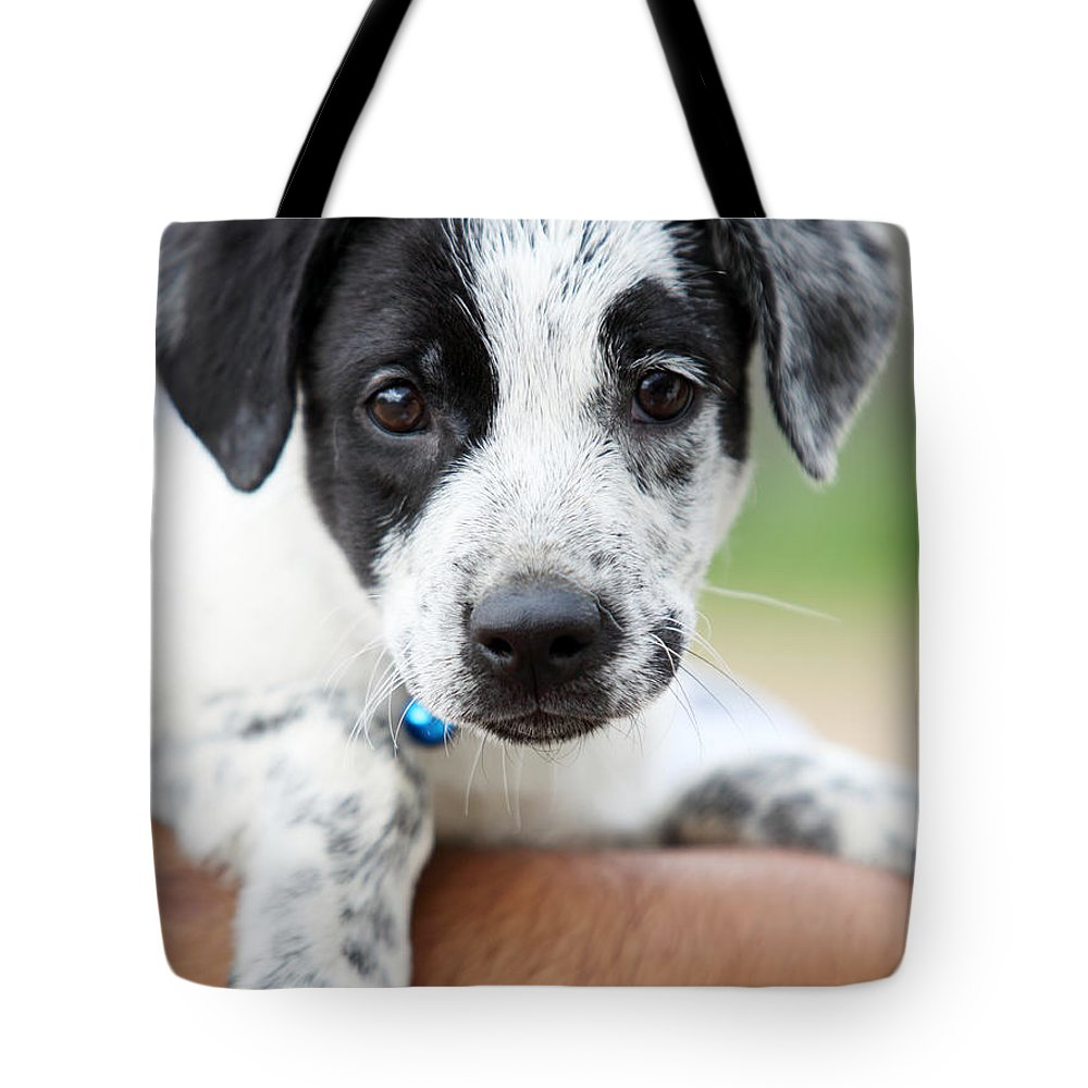 Puppy Tote Bag featuring the photograph Sweetness by Amanda Barcon