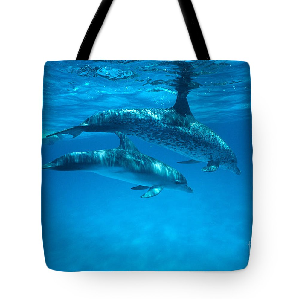 Bahama Tote Bag featuring the photograph Swimming Dolphins by Ed Robinson - Printscapes