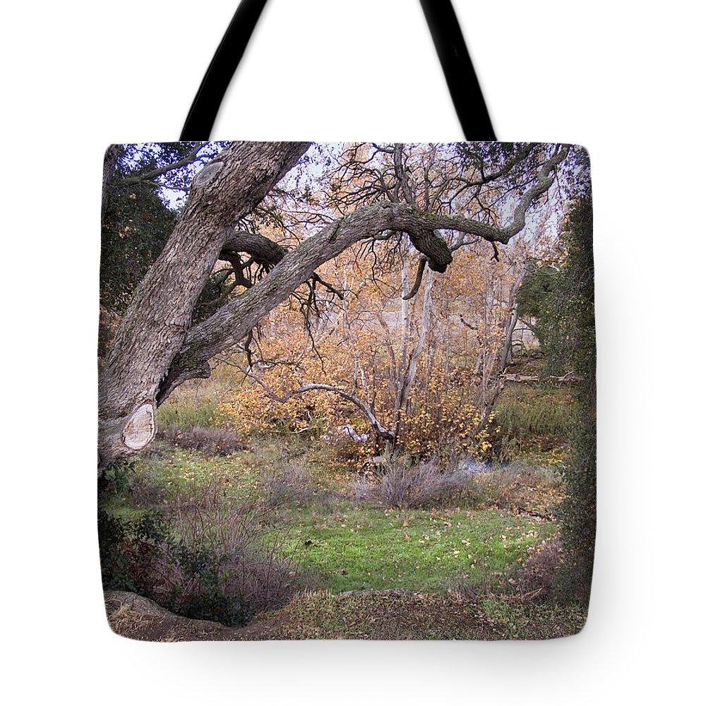 Landscape Tote Bag featuring the photograph Sycamore Grove Fall by Karen W Meyer