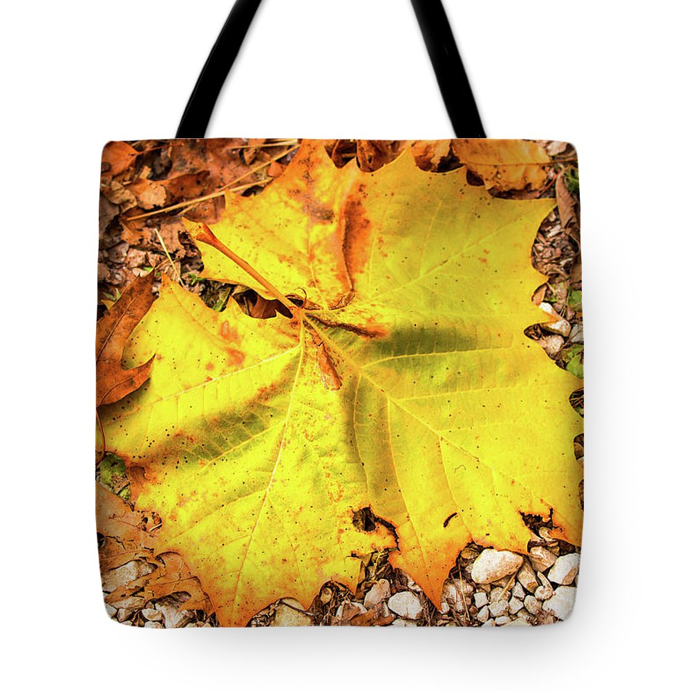 Fall Tote Bag featuring the photograph Sycamore Leaf In Fall by Edie Ann Mendenhall