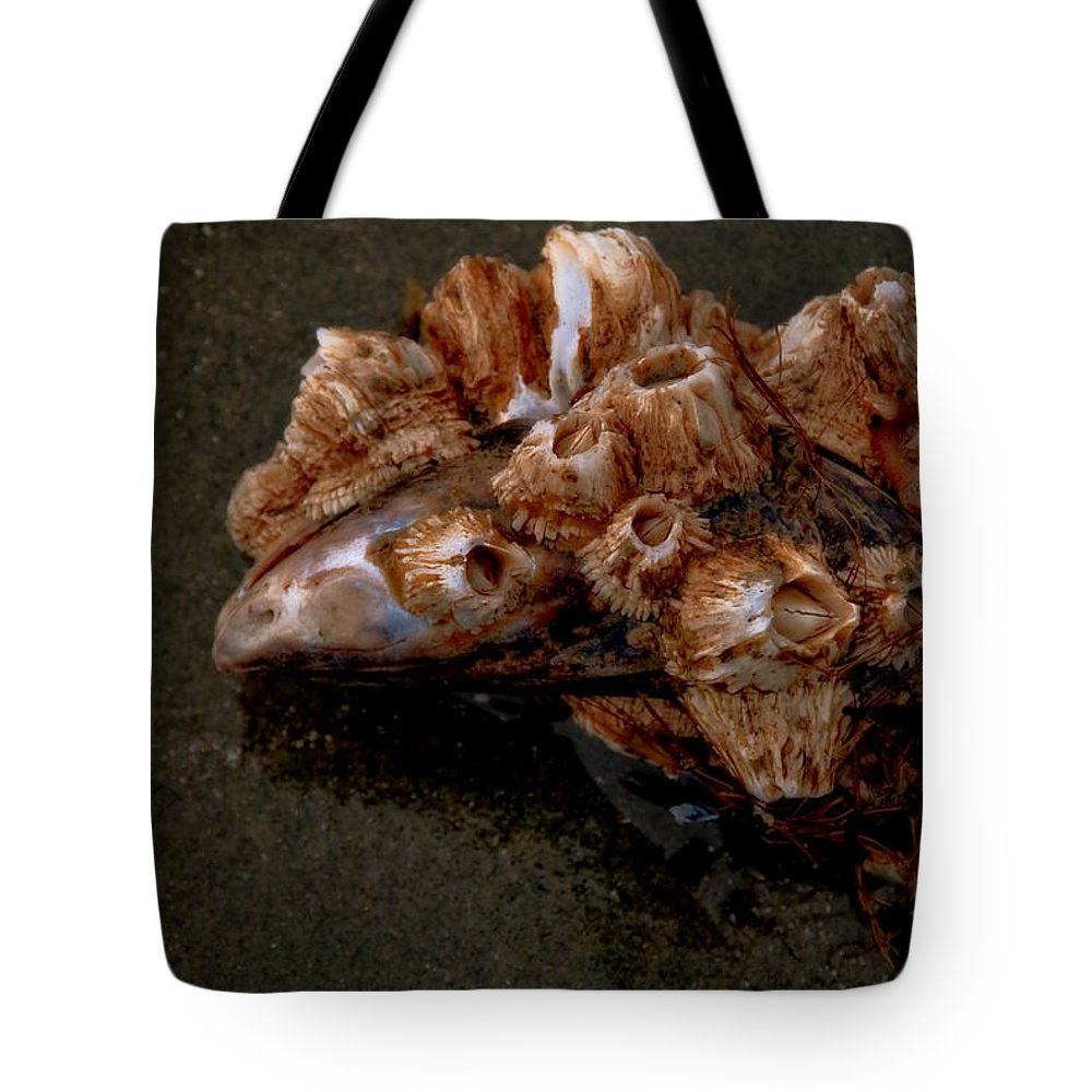 Barnacles Tote Bag featuring the photograph Symbiosis by Venetta Archer