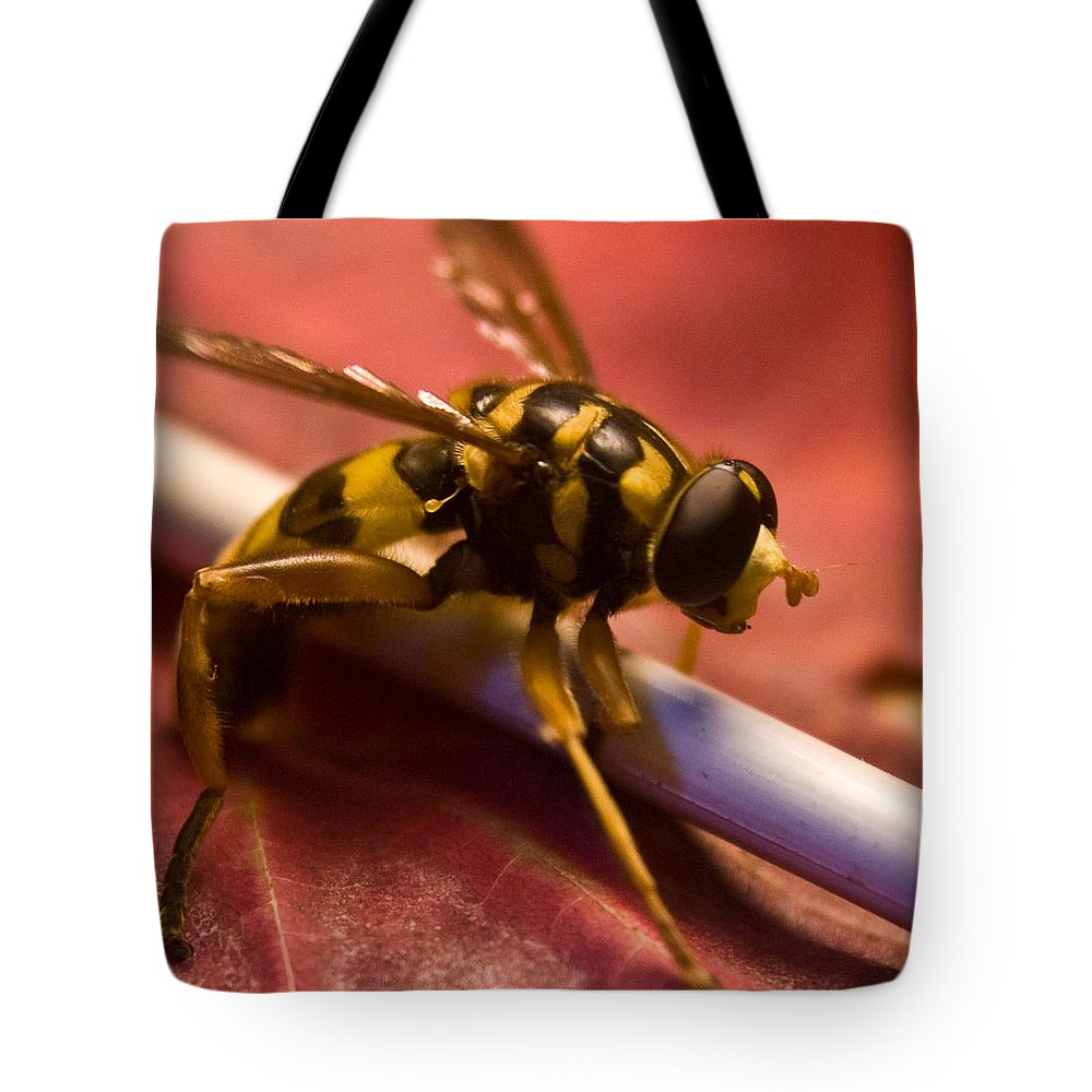 Insect Tote Bag featuring the photograph Syrphid Fly Poised by Douglas Barnett