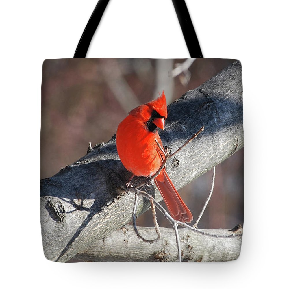 Cardinal Tote Bag featuring the photograph Take My Picture by Lori Tambakis