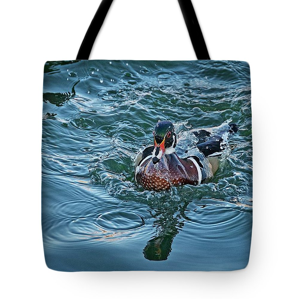 Nature Tote Bag featuring the photograph Taking a Dip, Wood Duck by Zayne Diamond Photographic