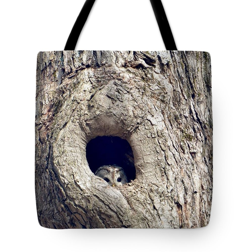 Owl In Tree Tote Bag featuring the photograph Taking A Peek by John Taylor