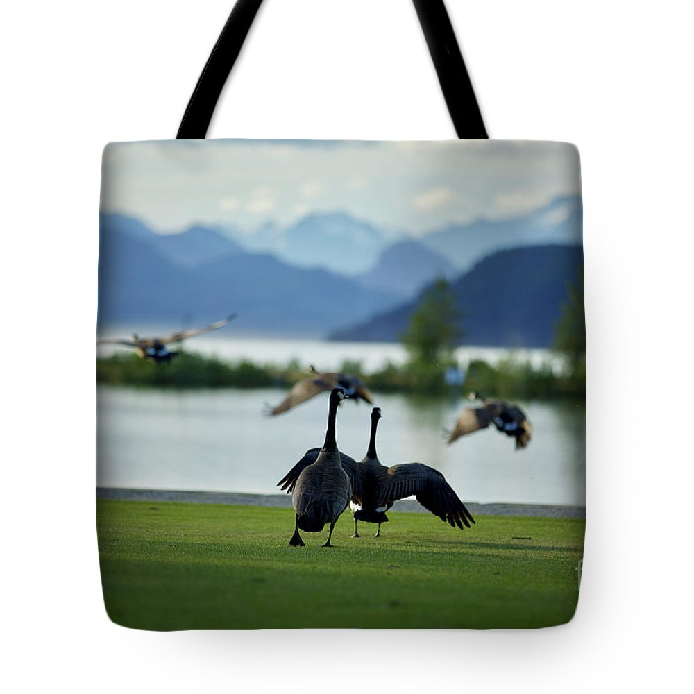 Canada Geese Taking Flight. Tote Bag featuring the photograph Taking Flight by Jason Gallant