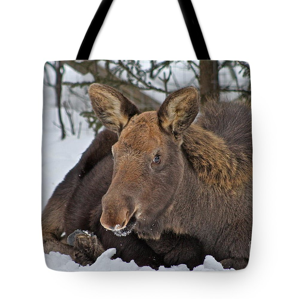 Moose Tote Bag featuring the photograph Taking It Easy by Rick Monyahan