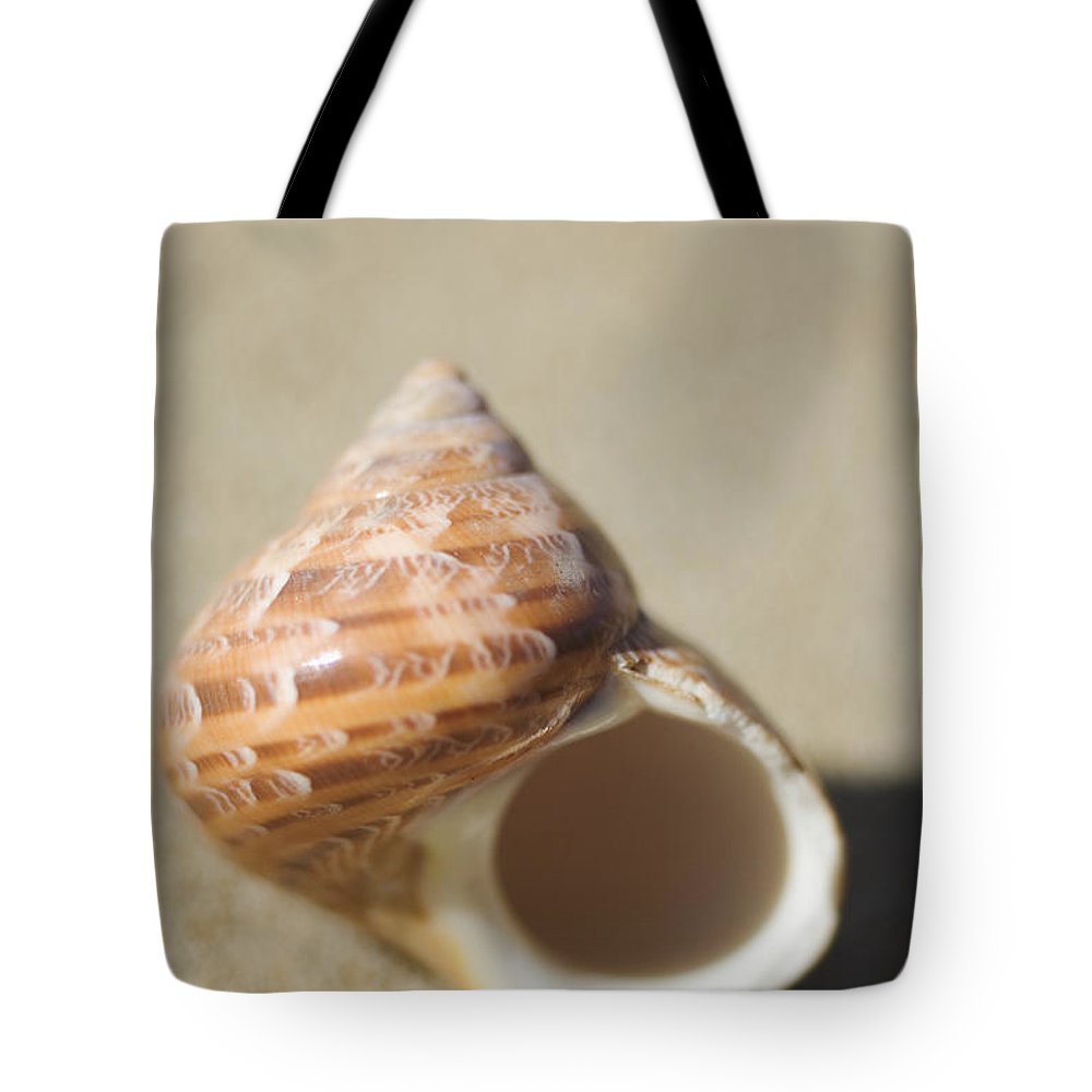Background Tote Bag featuring the photograph Tapestry Turban Seashell by Mary Van de Ven - Printscapes