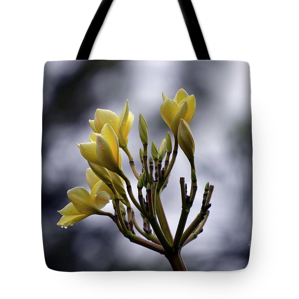 Tote Bag featuring the photograph Tarde Lluviosa by Lenin Caraballo