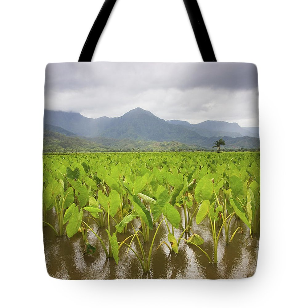 Afternoon Tote Bag featuring the photograph Taro Field by Ron Dahlquist - Printscapes
