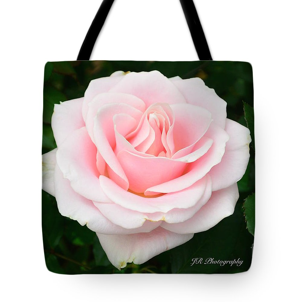 Bloom Tote Bag featuring the photograph Tea Rose In Pink by Jeannie Rhode