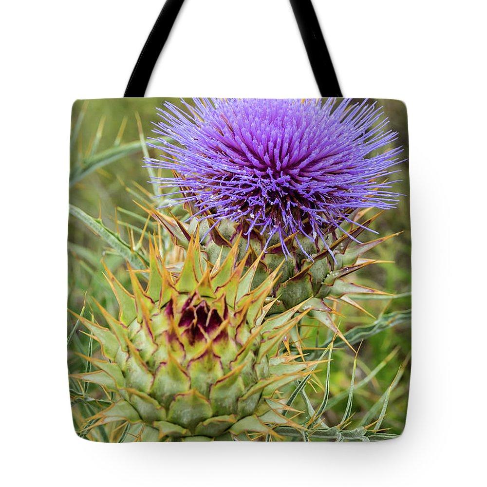 Teasel In Bloom Tote Bag featuring the photograph Teasel In Bloom by Robert VanDerWal