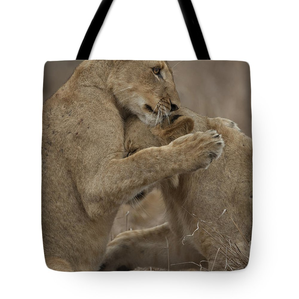Lions Tote Bag featuring the photograph Tender Moment by Leigh Lofgren