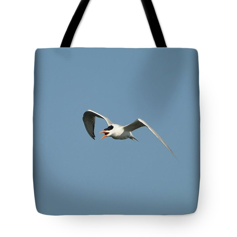 Tern Tote Bag featuring the photograph Tern Flight 02 by Al Powell Photography USA