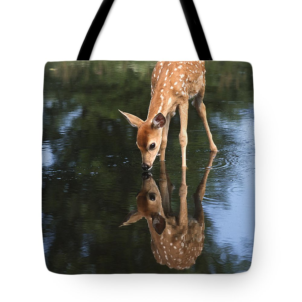 Deer Tote Bag featuring the photograph That Must Be Me by Sandra Bronstein
