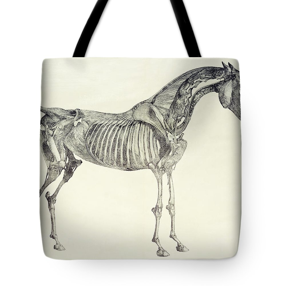 The Anatomy Of The Horse Tote Bag for Sale by George Stubbs