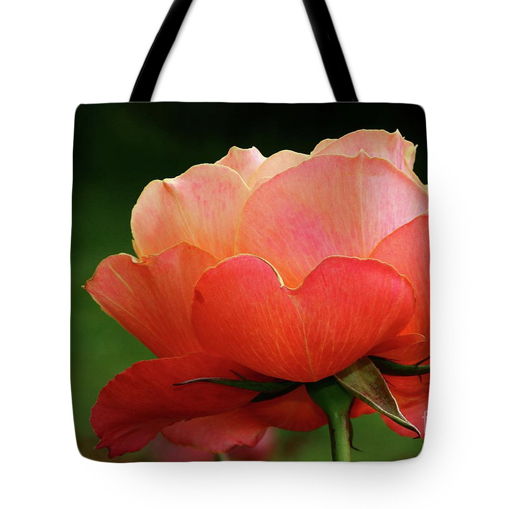 Rose Tote Bag featuring the photograph The Beauty Of A Rose by Christiane Schulze Art And Photography