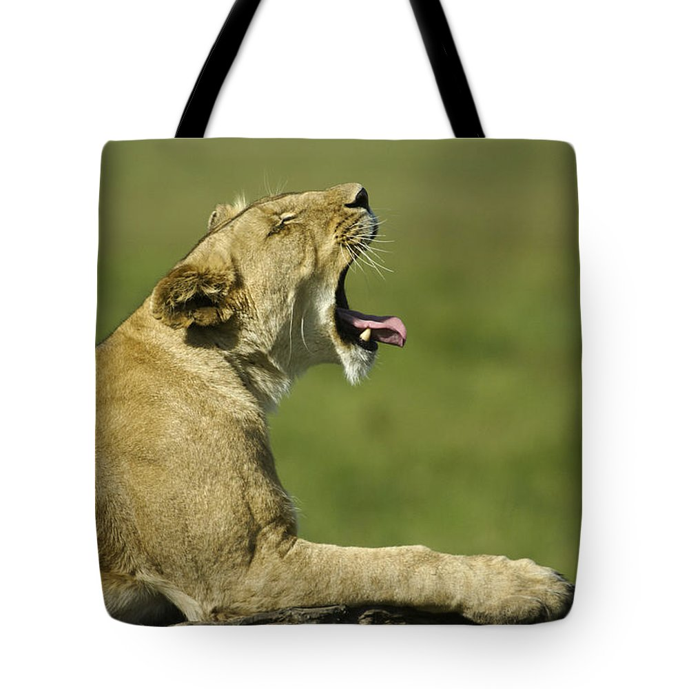 Africa Tote Bag featuring the photograph The Big Yawn by Michele Burgess