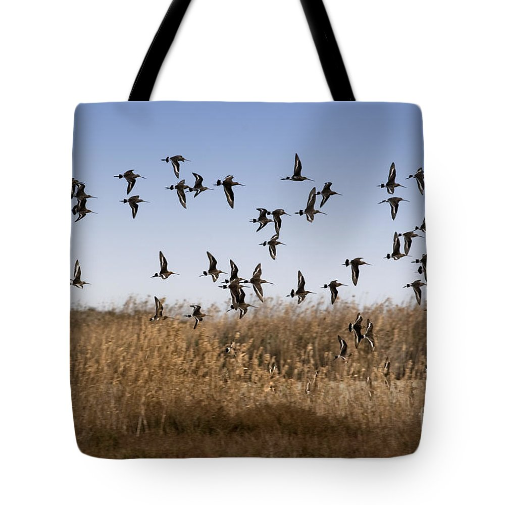 Wildlife Tote Bag featuring the photograph The Birds by Angel Ciesniarska