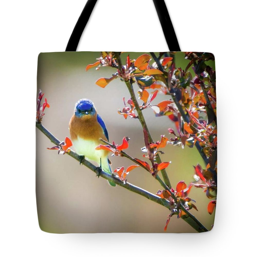 Eastern Male Bluebird Tote Bag featuring the photograph The Bluebird by Heather Hubbard