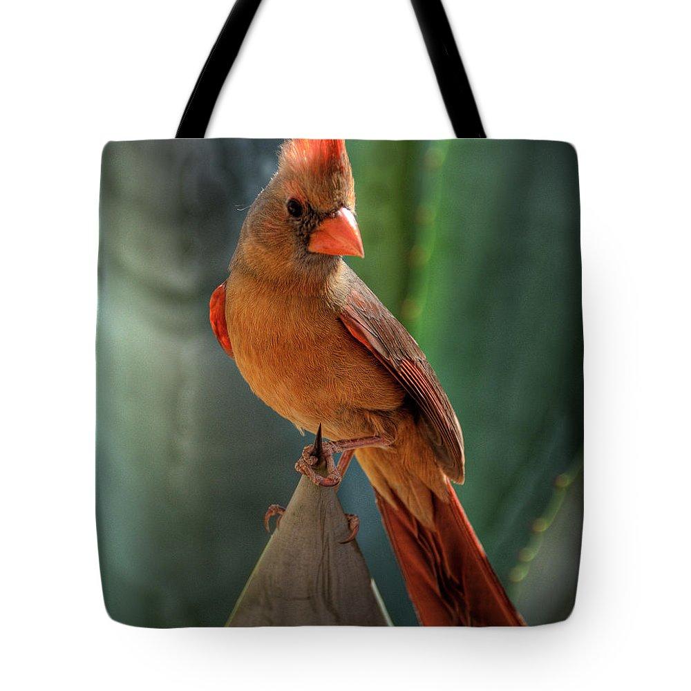 Female Cardinal Tote Bag featuring the photograph The Cardinal by Saija Lehtonen