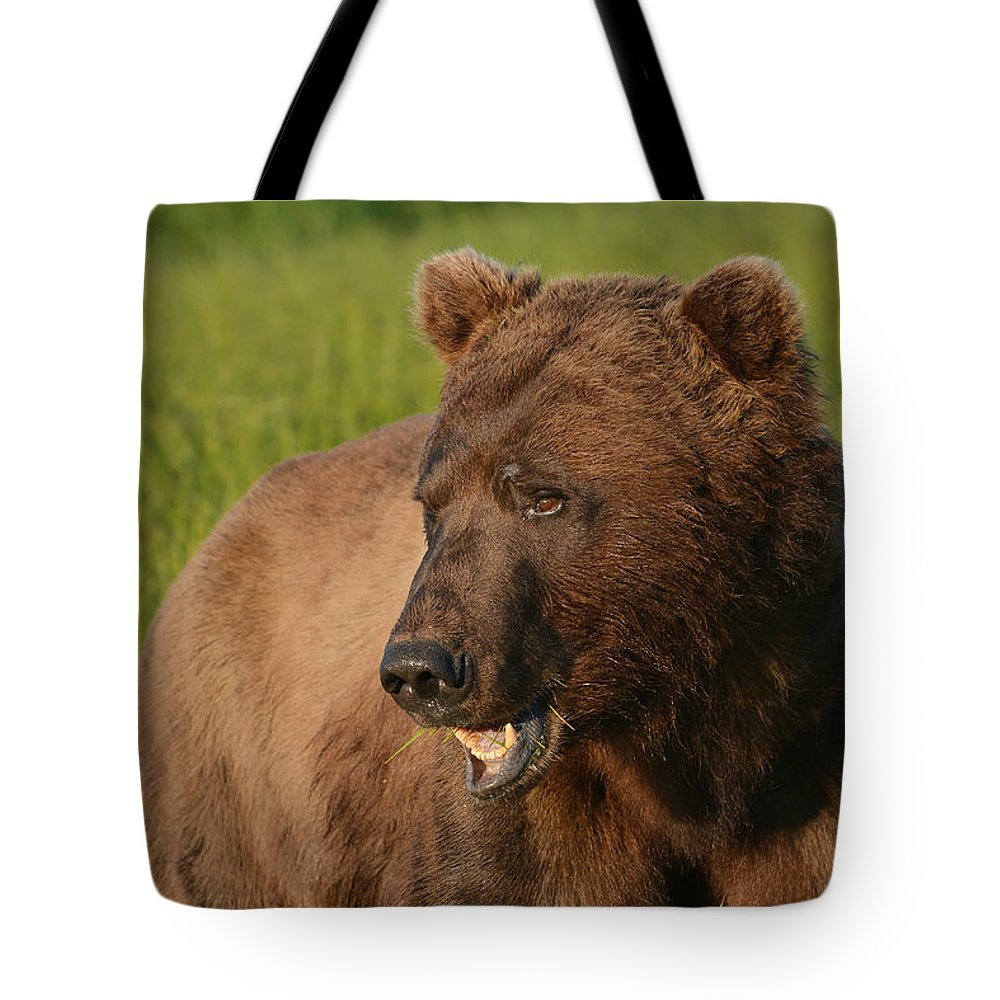 Grizzly Bear Tote Bag featuring the photograph The Chew 2 by Fraida Gutovich