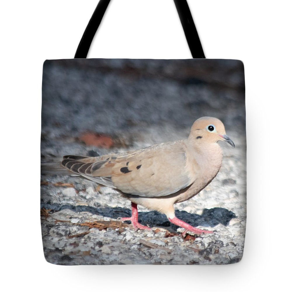 Mourning Dove Tote Bag featuring the photograph The Chipper Mourning Dove by JR Cox